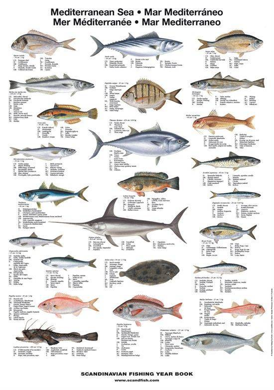 Виды морских рыб и особенности их обитания