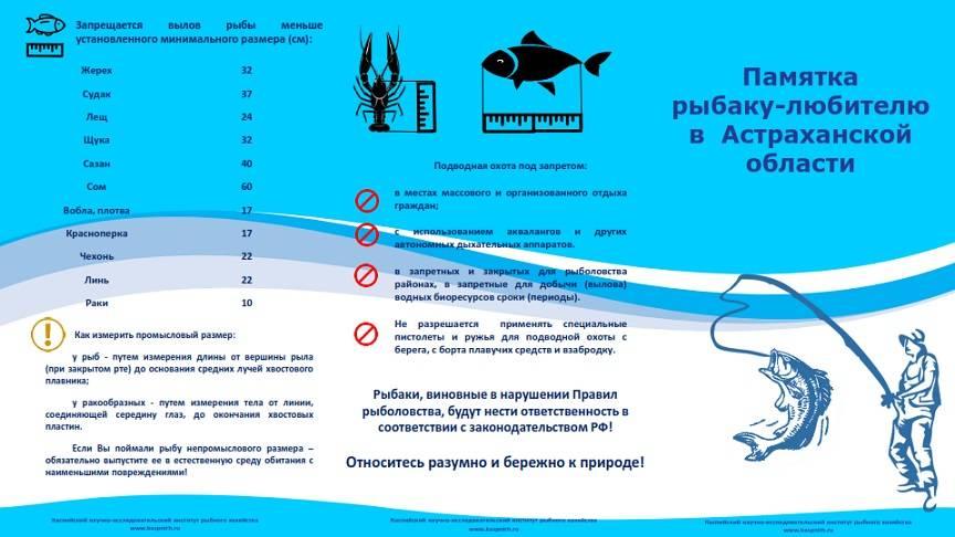 Минимально разрешенные к вылову размеры рыбы для дальневосточного рыбохозяйственного бассейна, сохрани в закладки