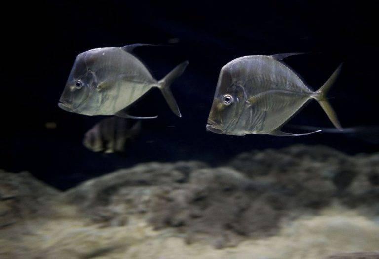 Рыба карась - чем питается и где обитает карась (115 фото + видео)