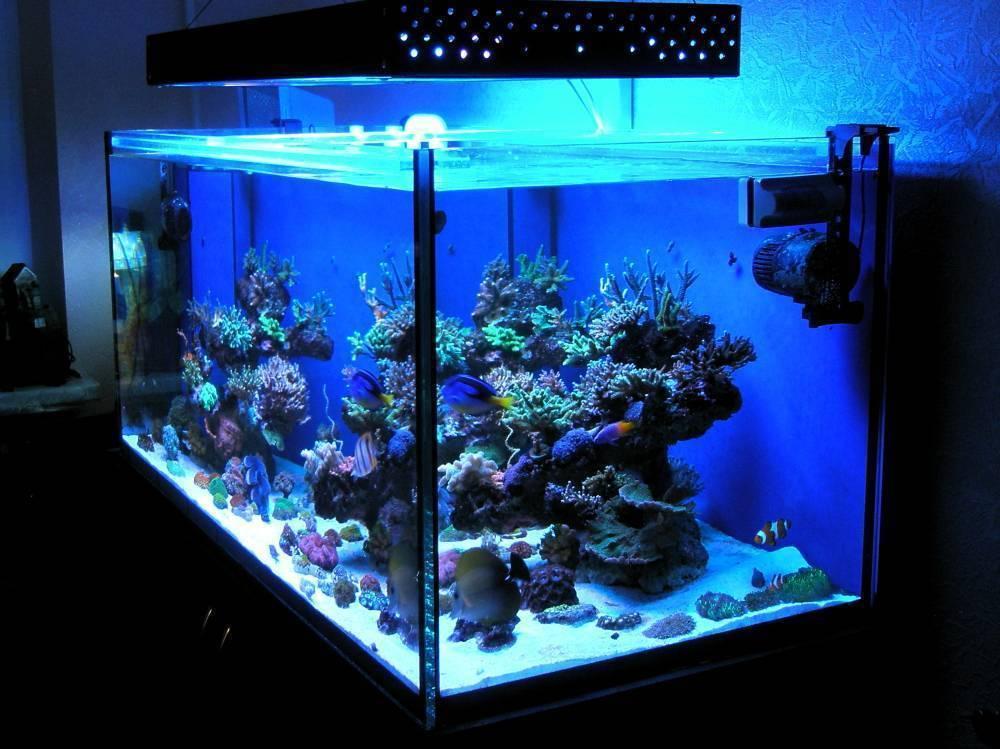 Все об освещение для домашнего аквариума