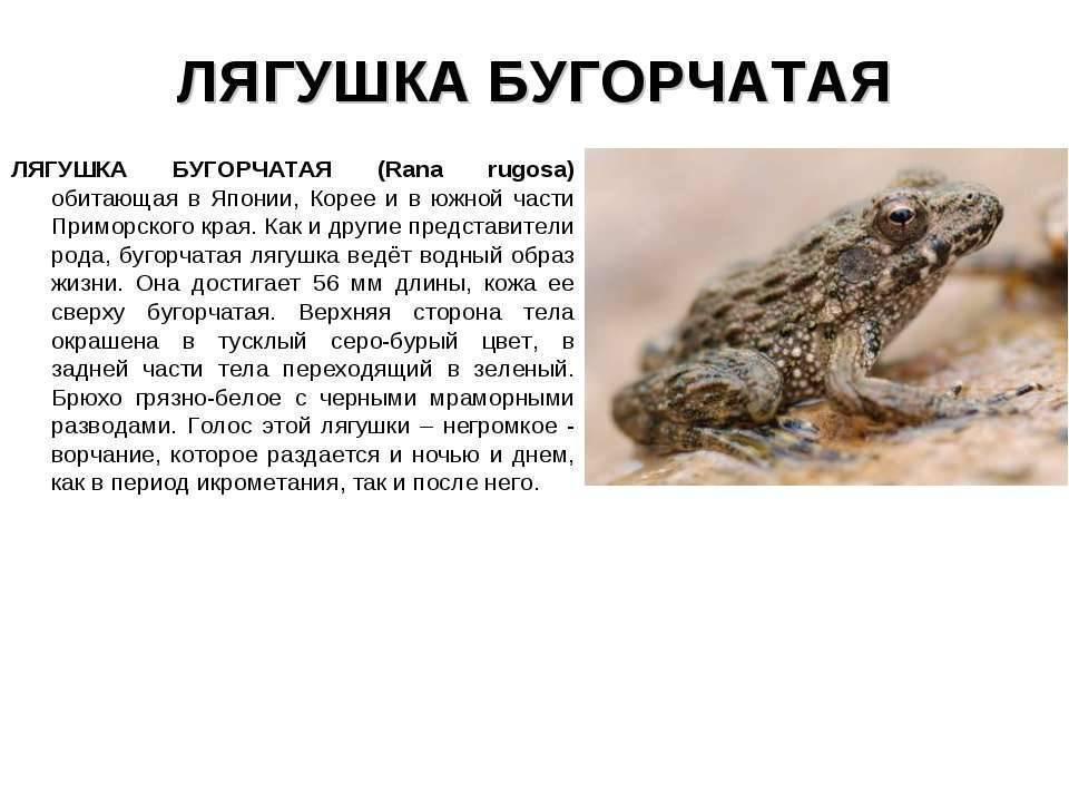 Лягушка – современник человека и динозавра