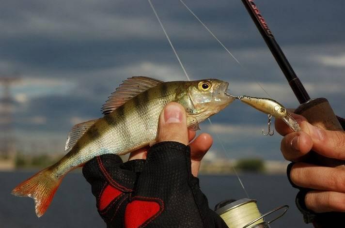 Когда клюет рыба: где, как и когда ее лучше ловить