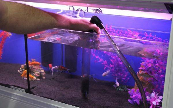 Зачем и сколько отстаивать воду для аквариума