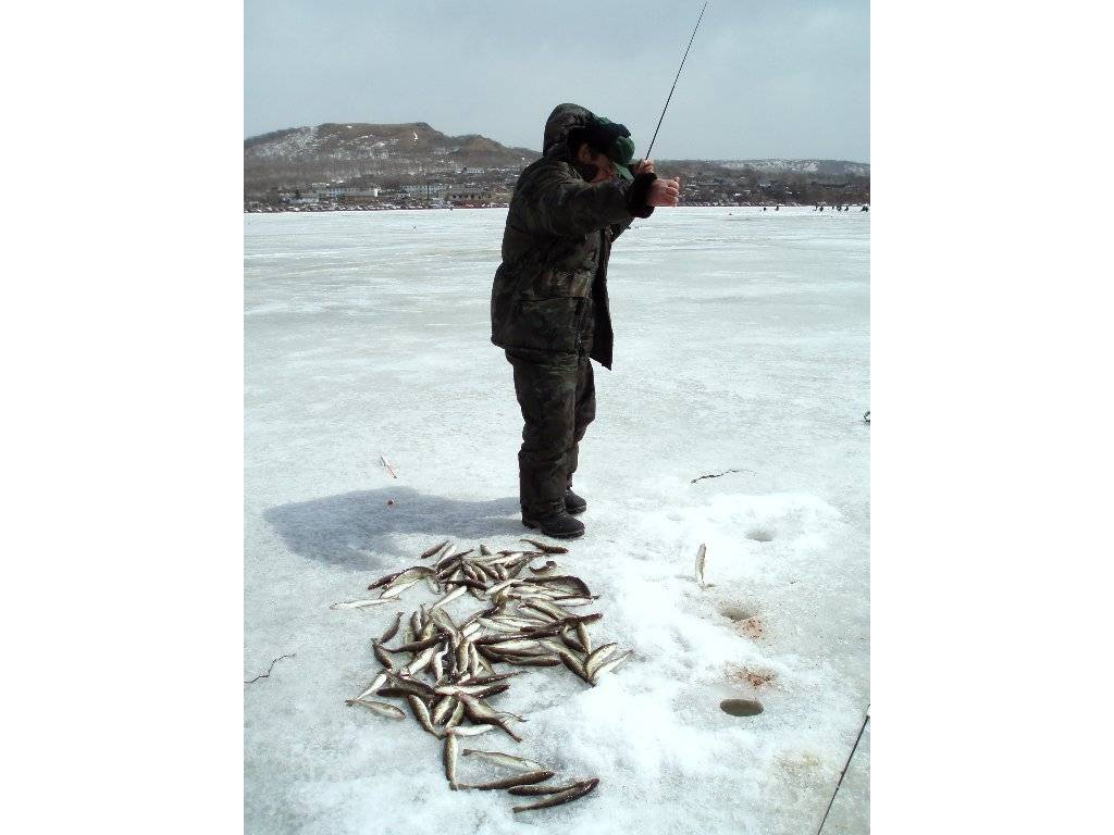 Блесна на корюшку - особенности ловли интересной рыбы