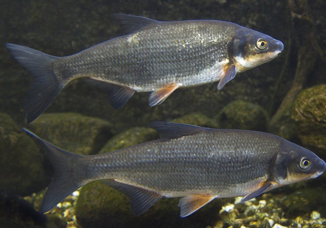 Чем питаются рыбы: обзор животных наживок для ловли рыбы зимой