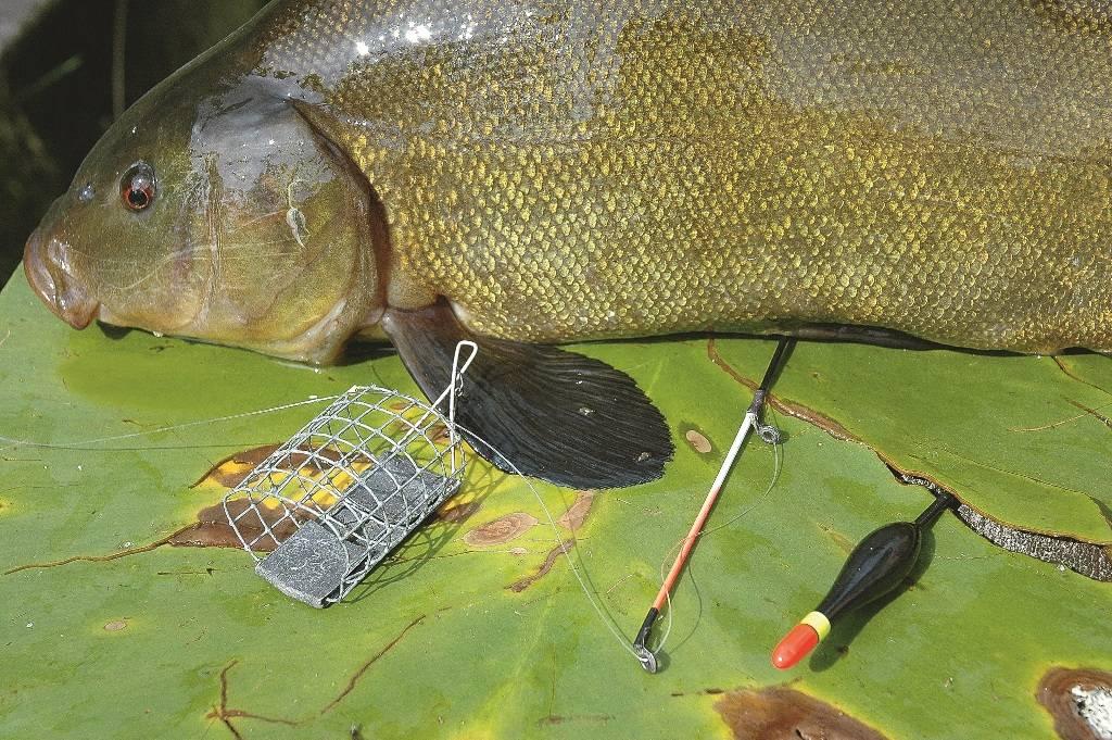 Рыбалка на линя весной - ловля на удочку и фидер, особенности
