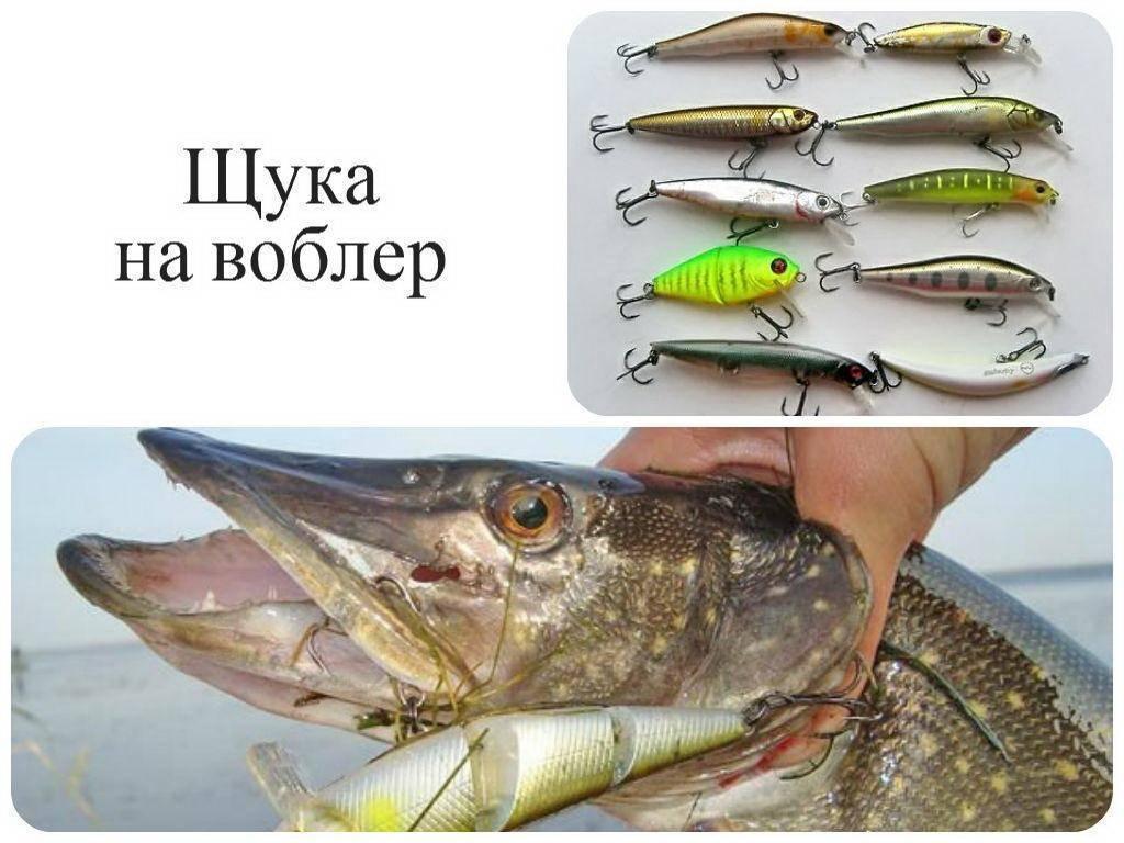 Твичинг – что это такое в разделе уловистых приемов рыбалки