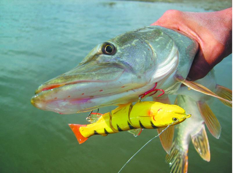 Воблеры типа уокер, топ 10 лучших рыболовных приманок бренда для ловли окуня, щуки