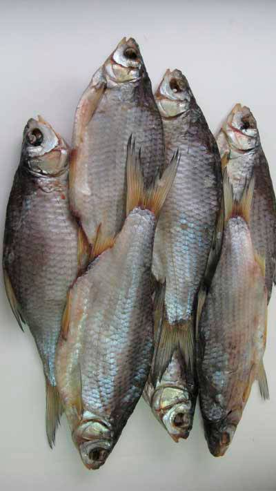 Рыба плотва: разновидности и особенности