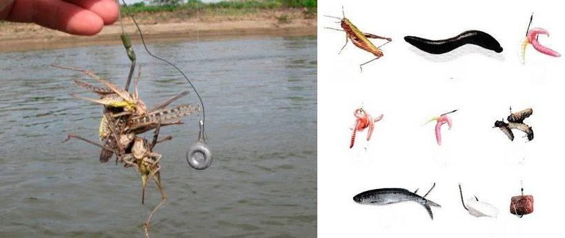 Наживки для ловли сома