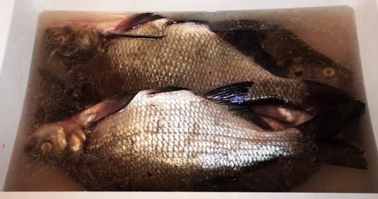 Как солить рыбу для копчения: засолка в домашних условиях, приготовления соляного раствора