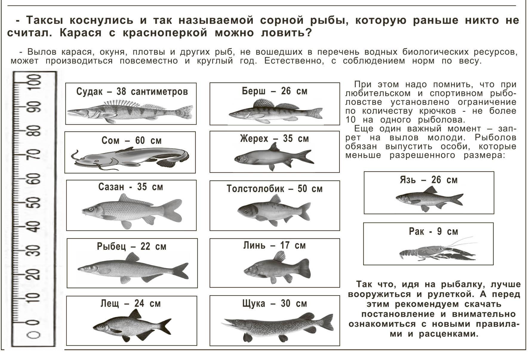 """Презентация на тему: """"вода в байкале пресная, чистая и прозрачная. а какие рыбы живут в водах байкала? какие из них встречаются только в байкале? ихтиологи делят байкальских."""". скачать бесплатно и без"""