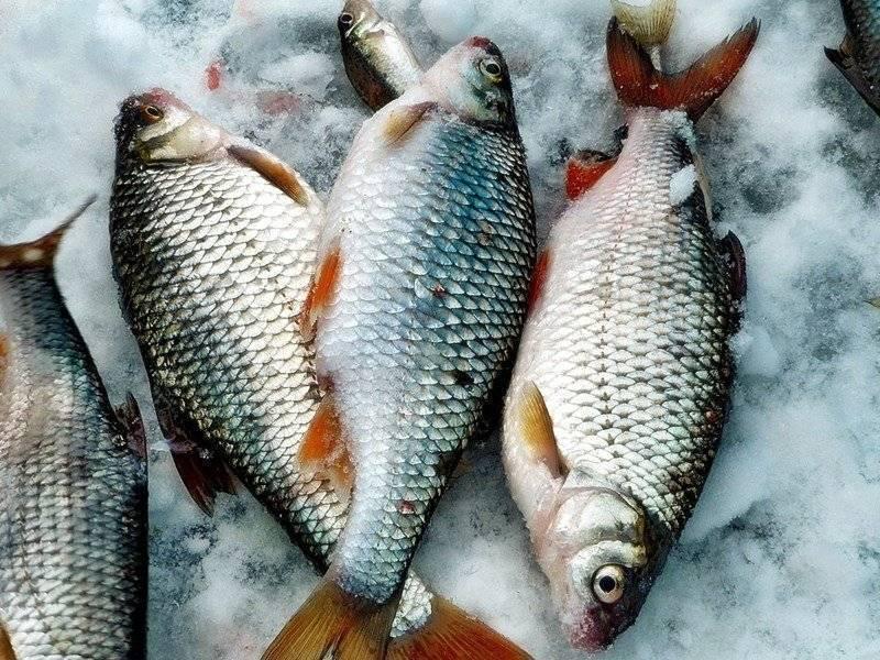Рыбалка на красивой мече – зимняя и летняя рыбалка, отзывы и видео
