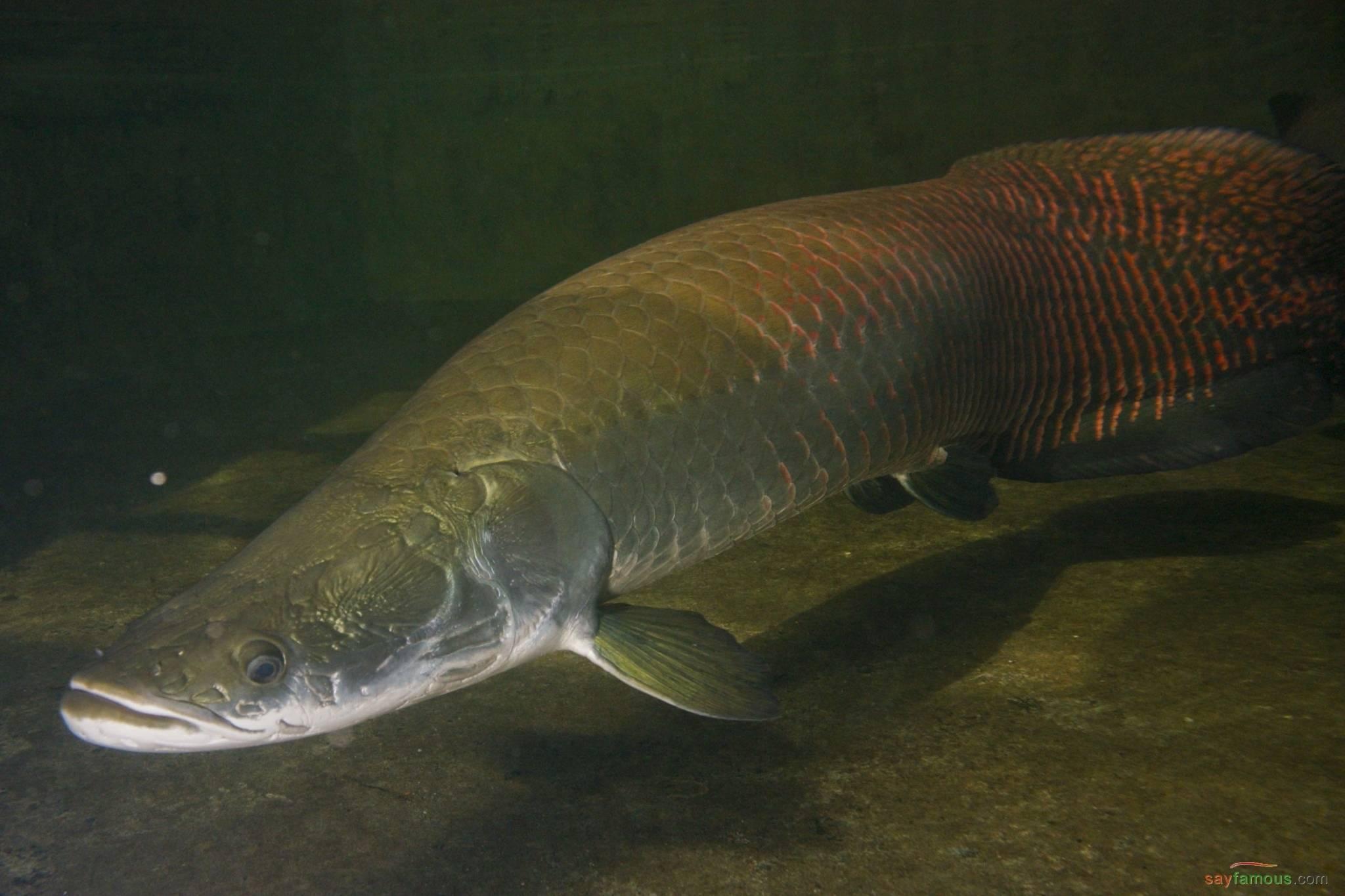 Рыба капля?: фото и описание. как выглядит капля?, чем питается и где водится
