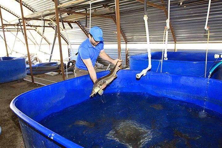 Прудовое рыбоводство: как правильно организовать? — cельхозпортал