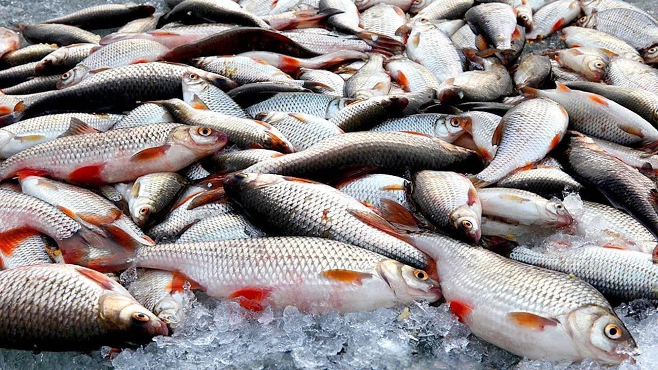 Рыбалка на амуре — особенности ловли весной, зимой или летом, какая рыба водится