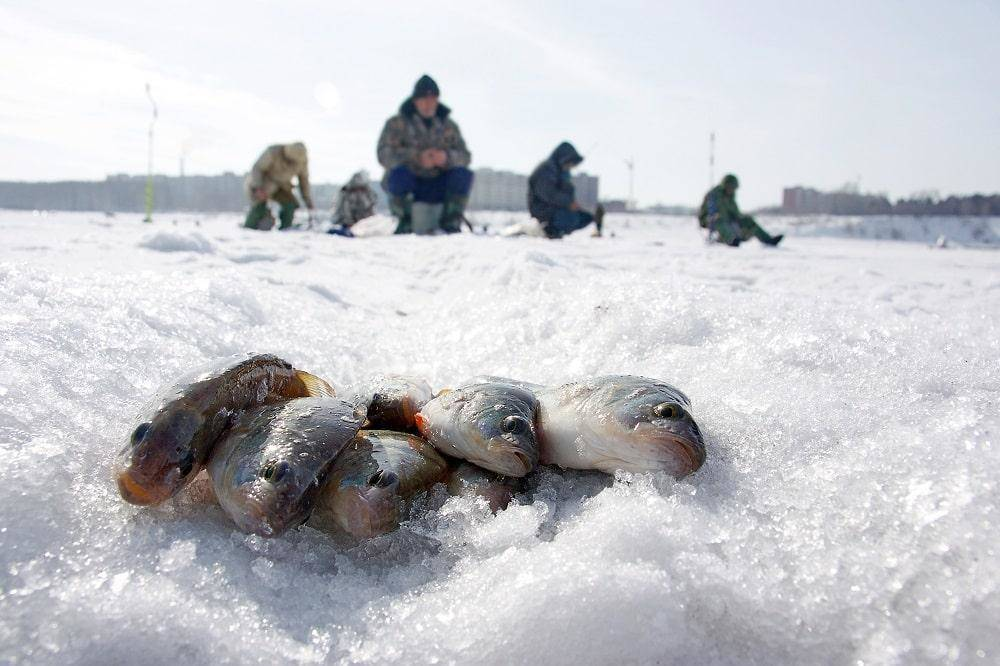Руководство по зимней рыбалке для начинающих