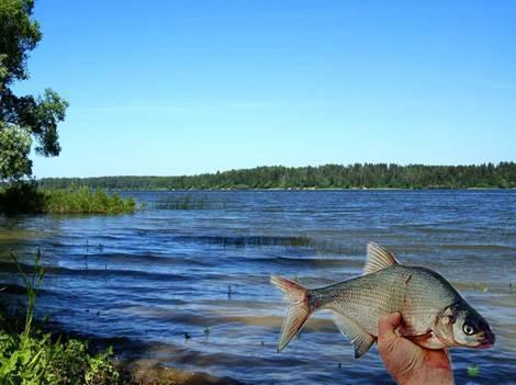 Рыбалка в истринском районе московской области: платная и бесплатная