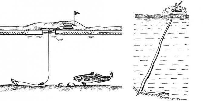 Налим — места обитания, календарь клёва и способы ловли