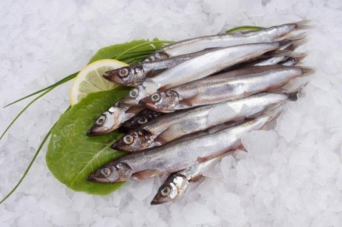 Мойва: образ жизни рыбы, фото