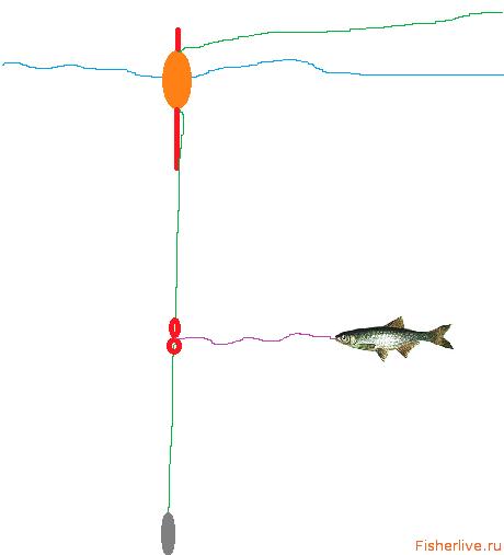 Как насаживать живца на крючок