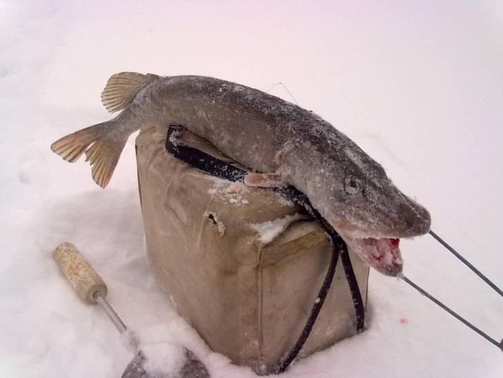 Как насаживать живца на крючок: 5 лучших способов - рыбачок!сайт рыбачок