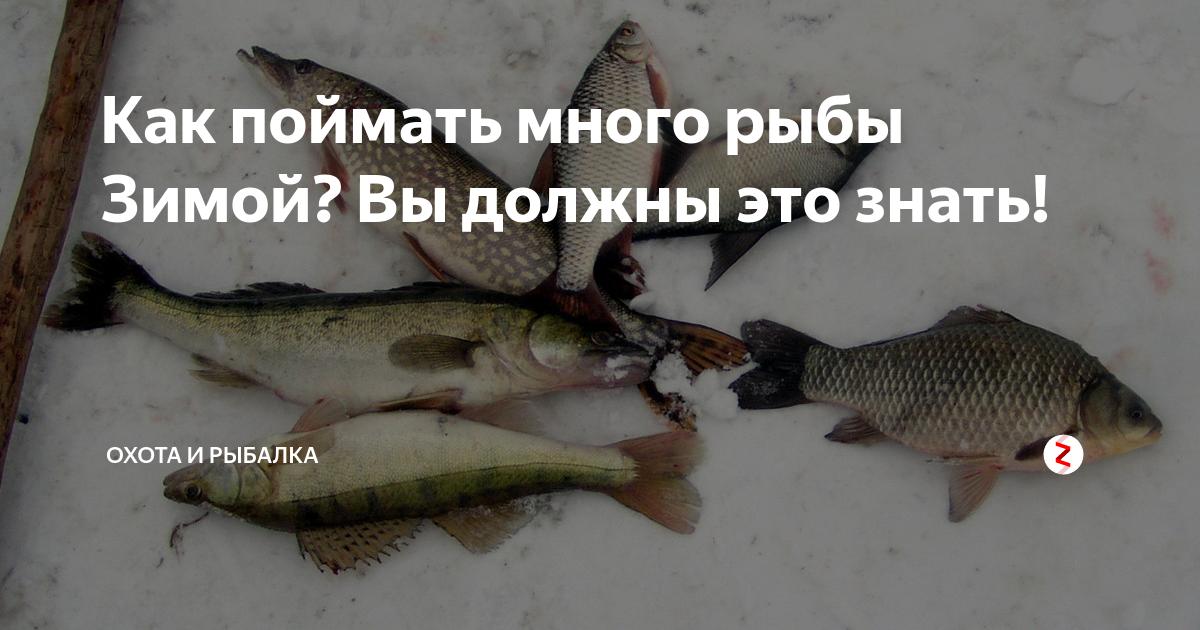 5 рекомендаций о том, как увеличить улов рыбы зимой
