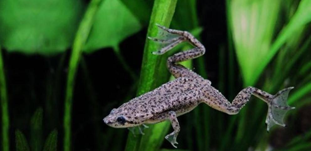 Для любителей экзотики: могут ли лягушки находиться в одном аквариуме с рыбками
