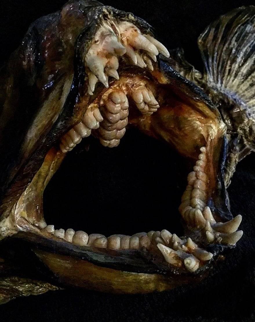Зомби-черви и акула-гоблин: 10 самых странных тварей марианской впадины