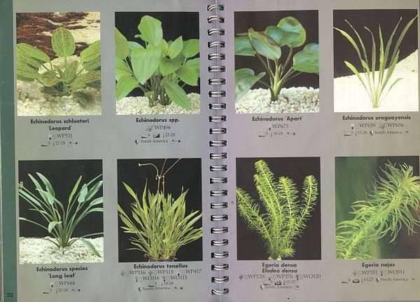 Топ-10 аквариумных растений для начинающих: фото с названиями, описание