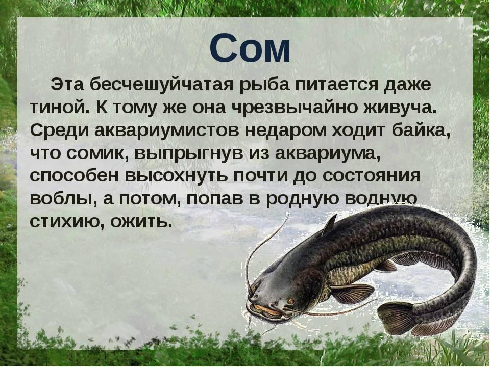 Разновидности речных рыб: виды, список, названия, описание с фото и места обитания - truehunter.ru