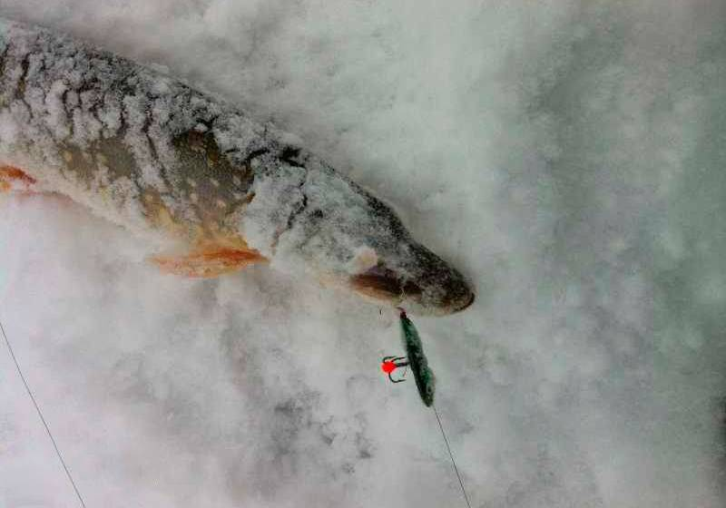 """Виды """"бокоплава"""" для зимней рыбалки. изготовление приманки и выбор в магазине"""
