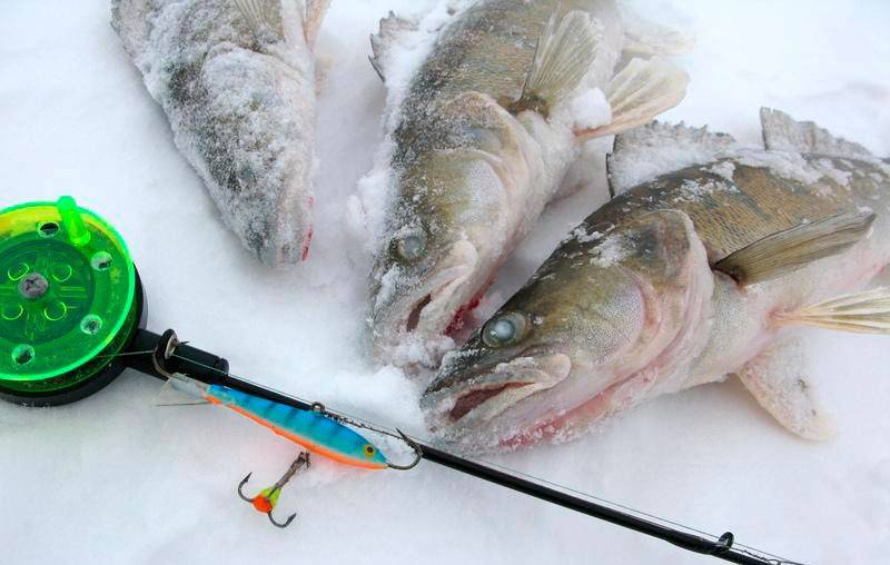 Балансиры на судака. топ лучших и ловля судака зимой на балансир