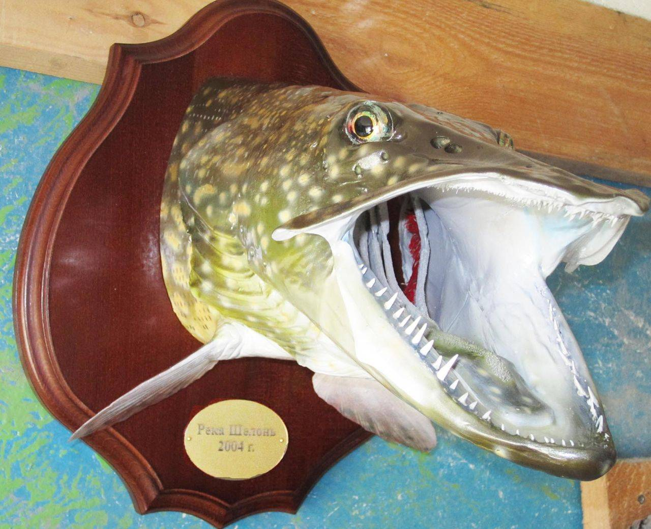 Как изготовить чучело рыбы своими руками?
