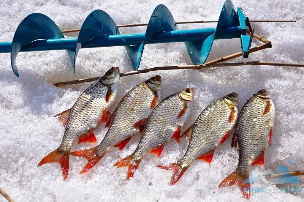 Как стать рыбаком