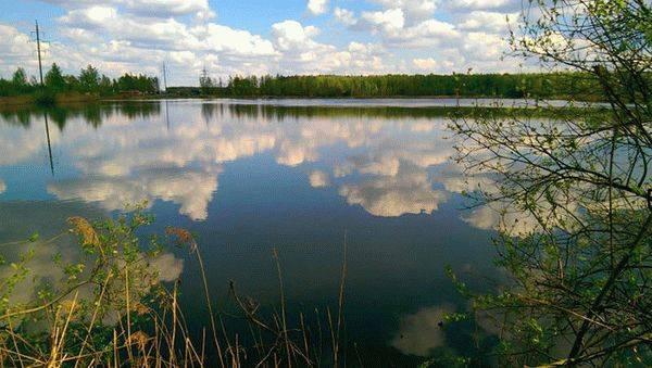 Ногинск - календарь рыболова. рыбалка в ногинске, график клёва рыбы.