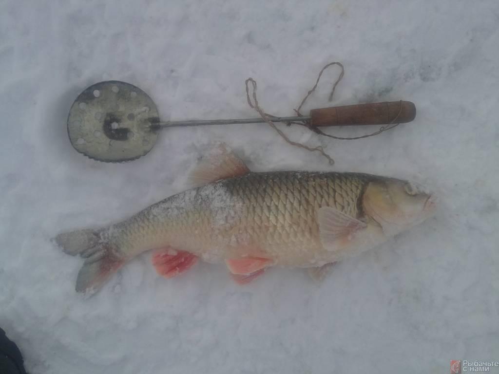 Ловля голавля: зимой, на течении и малых реках различными способами