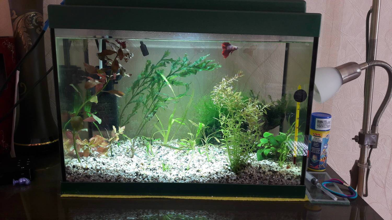 Рыбка петушок уход и содержание аквариумной рыбки: виды, фото