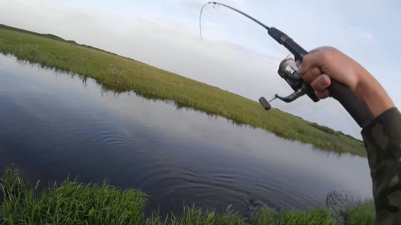 Какая рыба есть в реке ишим