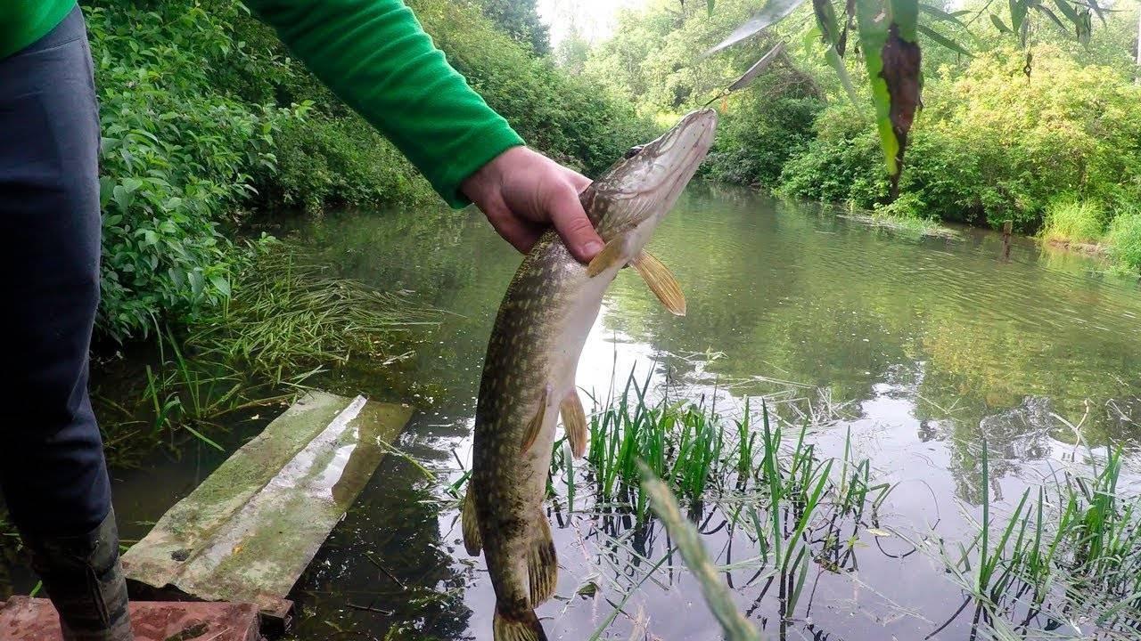 Ловля рыбы весной: по мутной воде