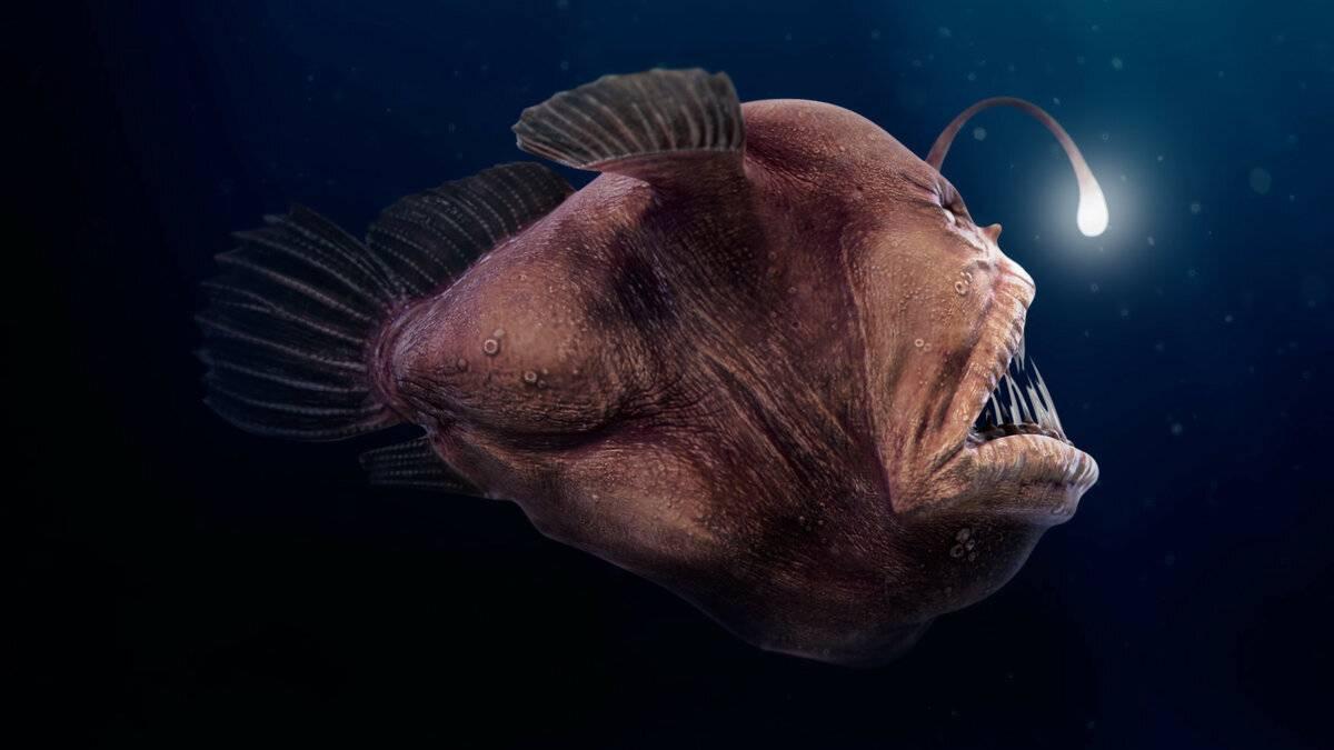 Самые ядовитые рыбы на земле: фото и описание
