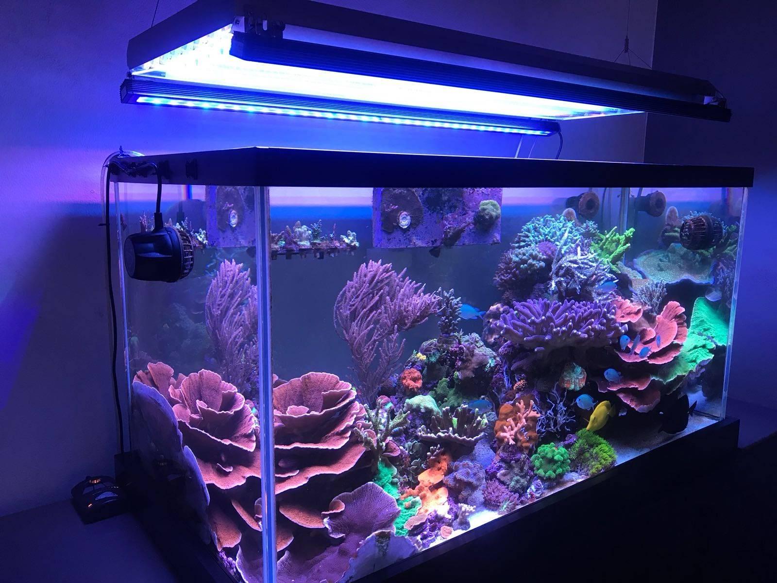 Как выбрать светильник для аквариума: расчет мощности ламп освещения