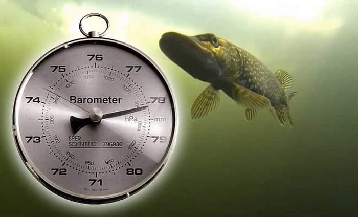 При каком давлении клюет рыба - при какой погоде происходит лучший клев