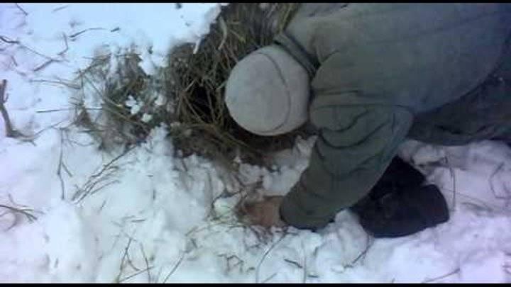 Ловля вьюна: (снасти, приманки, способы рыбалки летом и зимой)