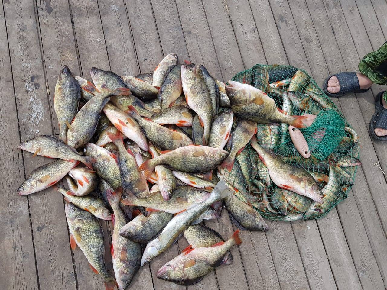 Река мста новгородской области: карта рыбных мест, особенности рыбалки, какая рыба водится