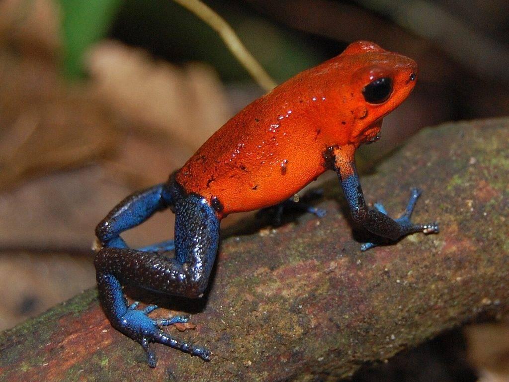 Самое ядовитое в мире существо (фото). какое существо самое ядовитое на планете согласно книге рекордов гиннеса?