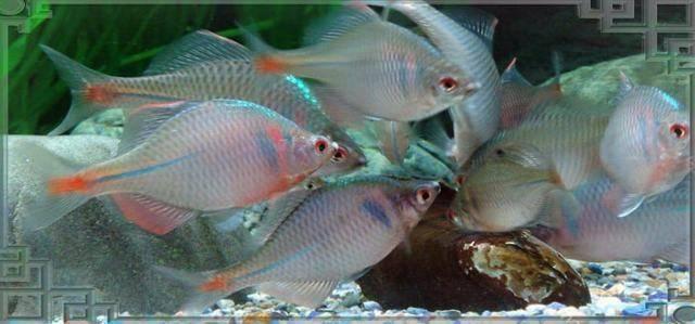 Рыба лобан – поведение, отличия от других кефалевых и как ловить