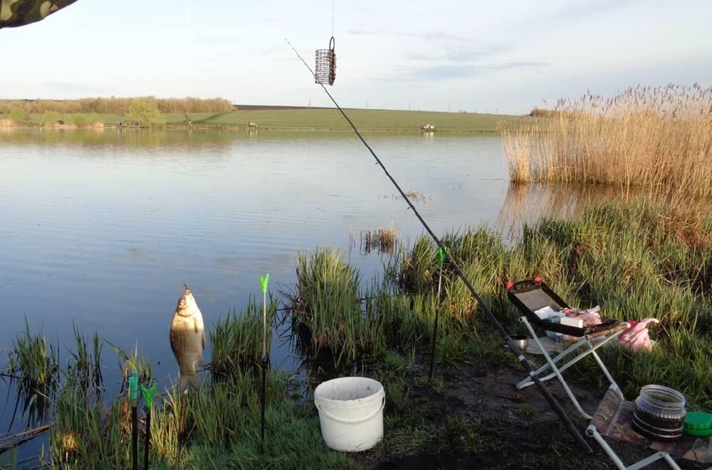 Клев рыбы в саратове: лучшие места и отзывы