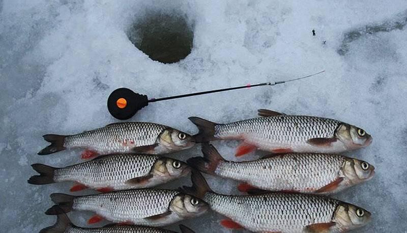✅ ловля голавля зимой: на что клюёт, как правильно ловить на реке - tehnoyug.com
