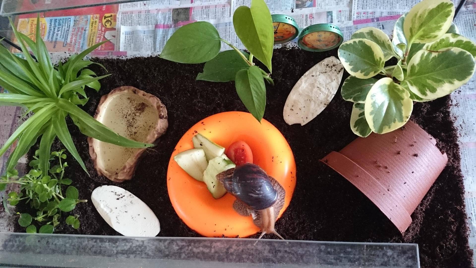 Сфагнум - описание с фото, виды и размножение, использование в народной медицине и цветоводстве